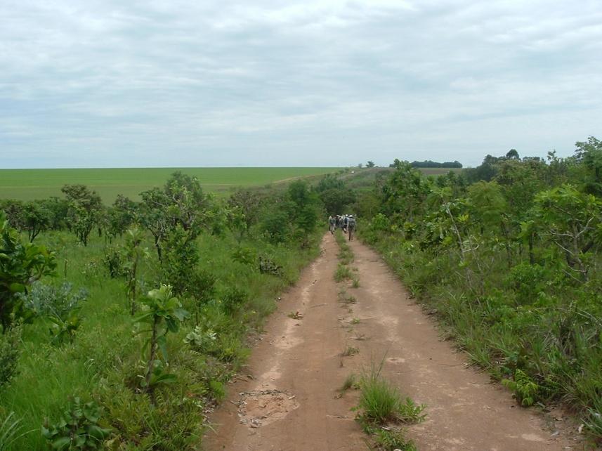 Veja a divisa das áreas de Cerrado com a plantação de soja (aofundo)